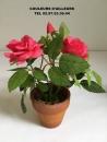 rosier-artificielle-miniature-couleurs-dailleurs