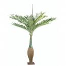 17 - palmier-bouteille 260 cm - 1400 - 71