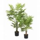 26 - palmier-parlour-buisson 90 120 cm - 14462 - 11
