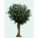 32 - ficus-geant-tree 350 cm - 11722 - 71