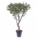 43 - olivier-new-geant 185 cm - 11185 - 71