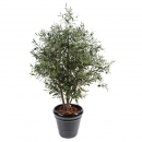 44 - olivier-new-buisson 140 cm - 11273 - 71