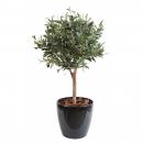 47 - olivier-new-ball-tree 55 cm - 11520 - 71