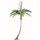 5 - coconut-courbe-new 270 cm - 16244 - 71