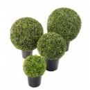 56 - buis-boule-pot- diam 30 cm - 14402 - 71