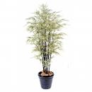58 - bambou-black-shiroshima-large 125 cm - 11373 - 11