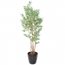 59 - eucalyptus-baies 185 cm - 11595 - 71