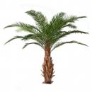 6 - palmier-canarie-3m 10978 - 71
