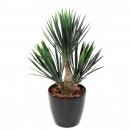 63 - yucca-baby 70 cm - 10787 - 71