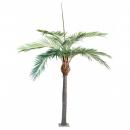8 - palmier 350 cm - 16218 - 71
