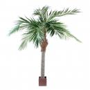 9 - palmier-majesty 250 cm - 686 - 71