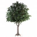 PUB 1 - chene-arbre 620 cm - 10514 - 71