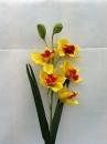 fl-orchidee-ja