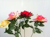 fl-rose-120