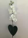mini-orchidee-d1-phalaenopsis-blanc