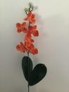 mini-orchidee-d1-phalaenopsis-orange