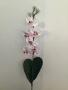 mini-orchidee-d1-phalaenopsis-rose