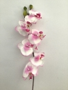 orchidee-cream-mauve-a1-phalaenopsis