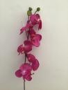 orchidee-fuschia-a1-fleurons-bourgeons