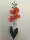 orchidee-phalaenopsis-orange-e1-feuille