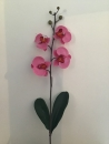 orchidee-phalaenopsis-rose-e1-feuille