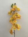 phalaenopsis-jaune-orange-b1-orchidee