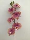 phalaenopsis-parme-b1-fleur-montage