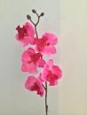 tige-orchidee-c1-beauty-artificielle