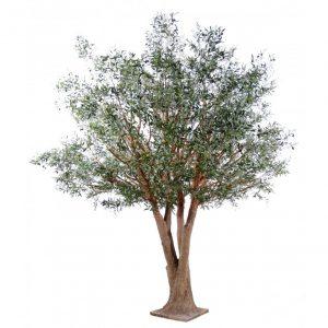 arbre olivier olive verte